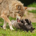 Go For The Jugular With A Motion For Summary Judgment